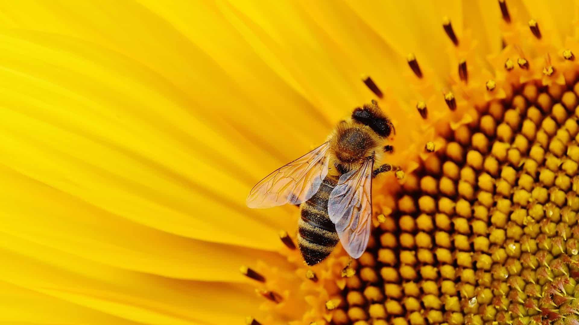 Pourquoi devez-vous essayer le parrainage d'abeilles ?
