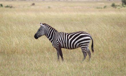 Quelques endroits à découvrir lors d'un voyage en Afrique